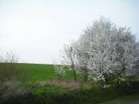 2010-04-13.jpg
